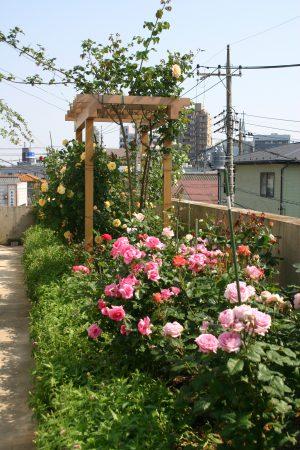 デルタクリニック3階庭園のバラ